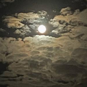 月見をしてきました