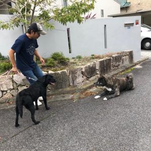 犬の訓練士さんがお友達を連れて来てくれました!