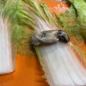 ロール白菜in牡蠣