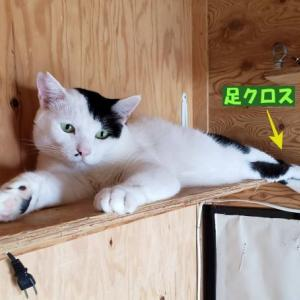 ねこneko写真館 vol.1