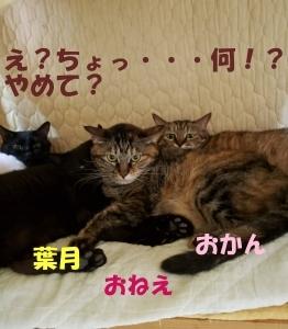 ねこneko写真館 vol.2