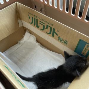珍しく子猫が6頭も居る!