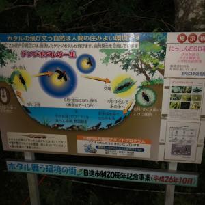 日進市の折戸川のホタルを見に行きました☆彡