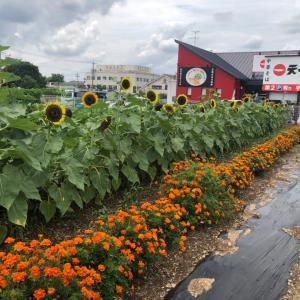 ひまわりが元気に咲く☆今年の梅雨入りは例年より21日早かった