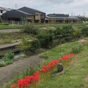 彼岸花が咲き季節は秋☆北小校区共生ステーションと児童館