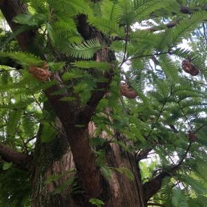 杁ヶ池公園でセミの抜け殻を眺めて命を感じる