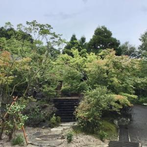 「糸島自然農園の恵 やぎ牧場」でやぎのミルクのプリン🍮