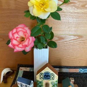 薔薇が咲いてます