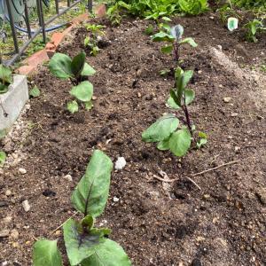 夏野菜少し植えました