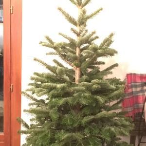 フランスIKEA 今年のツリー