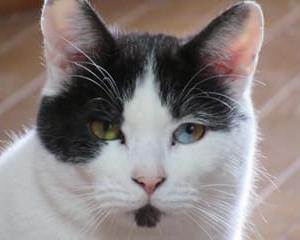 2月のワル猫カレンダー