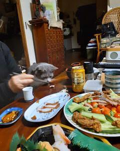 夕食とニャンコの豹変