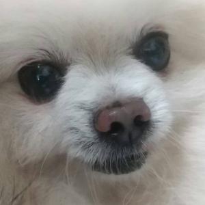 ブリーダー放棄犬追加引き取り(9/25)