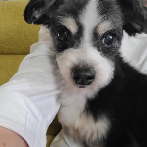 一般放棄犬の保護とブリーダー放棄犬の保護(10/24)