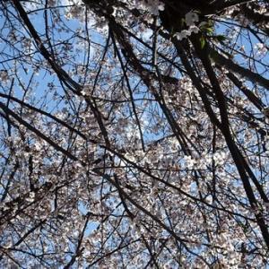 定番の春を取り戻す