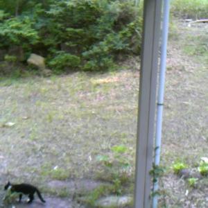 猫が来て写ってた