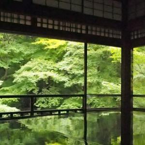 【京都】ガラ空きの瑠璃光院 青もみじを見に着物でお出かけ