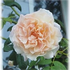 テッポウムシの穴 次女庭で・・・ またお花を買ってしまいました 台風の為岡山にいる次女