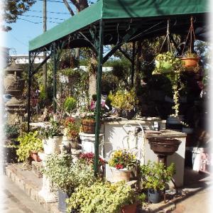 鹿児島の素敵なお花屋さん シャンドフルールへ行ってきました ローヴ・ドゥ・アントワネットの元へ
