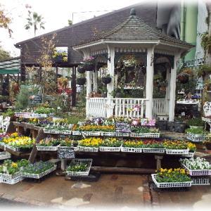 その2 素敵なお花屋さんへ行ってきました 計算されたナチュラルな景色