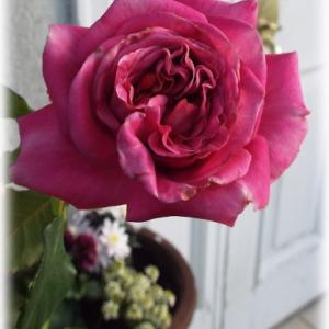 花のヤシマットの敷き方 隙間から土がこぼれないように ずっと咲いてるアニエスシリジェル
