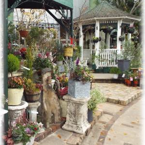 その3 鹿児島の素敵なお花屋さんへ行ってきました 危ない危ない記事を書いてると買いたくなる