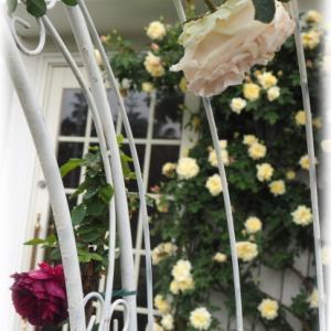 満開に近いセリーヌ フォレスティエ プルモナリア 白ときどき桃