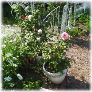バラとおしゃべり 128円の苗で出来た寄せ植え