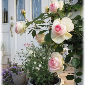 買った花と今朝の私と庭と春の庭