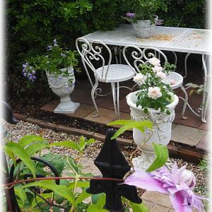スイートピー ロイヤルミッドブルーとロイヤル桃花の種蒔き 庭遊び