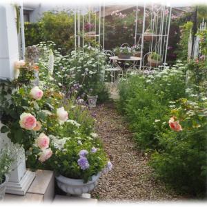 短いシュートを誘引 ブランピエールドゥロンサール 今年は上でも咲きそう