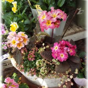 素敵なお花屋さん シャンドフルールへ行ってきました
