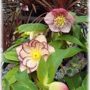 (その2)鹿児島の素敵なお花屋さんシャンドフルールへ