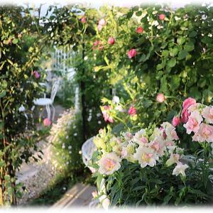 バラの多肥 お花屋さんも大忙しの季節 やさしいエグランティーヌ