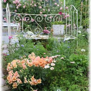 雨上がりのバラ庭 たまかずら レイニーブルー