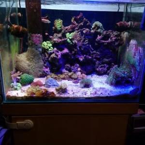 海水魚水槽を閉めます