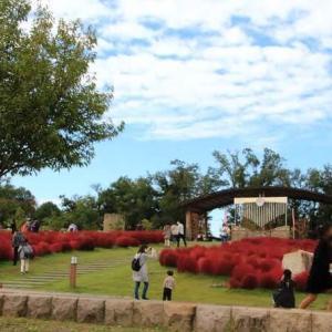 丸いモコモコ コキアの丘・奈良県営馬見丘陵公園(奈良県)