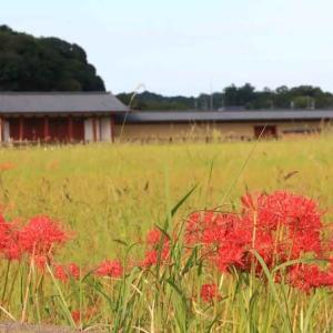 平城宮跡にも秋の訪れ ・ 近鉄奈良線(奈良県)