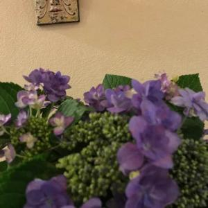 💠紫陽花いっぱい💠