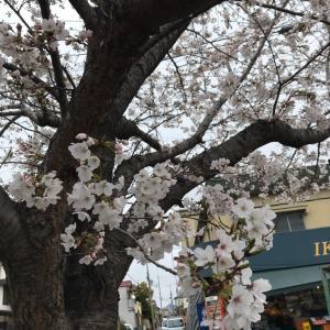 春の色に 染まり出しました。