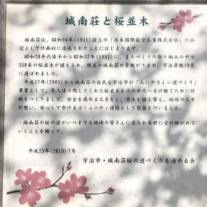 城南荘の桜って