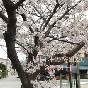城南荘の桜 2020