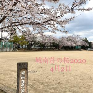 城南荘の桜