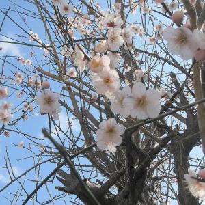 春の花芽や実が膨らむ