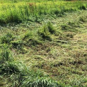 農家がお勧めする除草剤は?