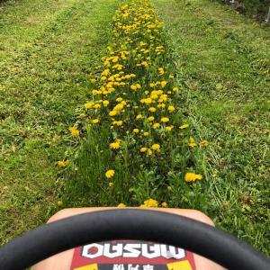 雨が降ると驚異的に草が伸びる。