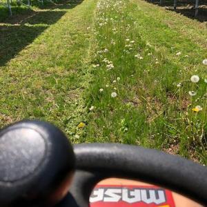 太陽光施設を乗用モアで草刈り