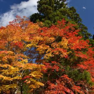 紅葉の高野山にて