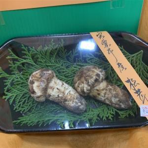 帰り路のおまけ  宍粟のマツタケ、夜のツキヨタケ     2020.10.18.(7)