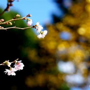 自宅近くの山寺で・・・・紅葉2       2020.11.15.(2)
